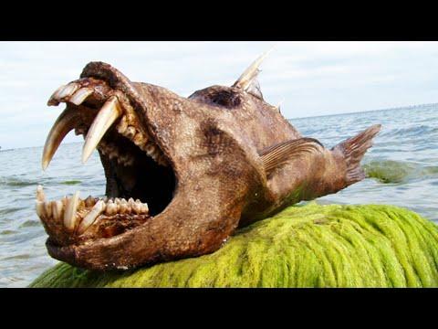 10 most bizarre deep sea creatures santa cruz waves for Deep sea fishing santa cruz