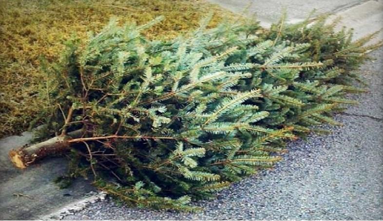tree-curbside