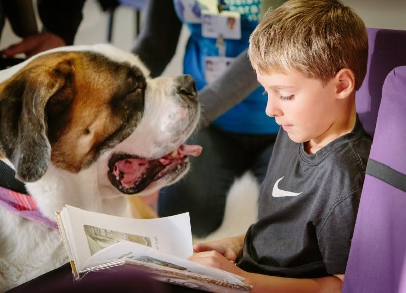 dog read