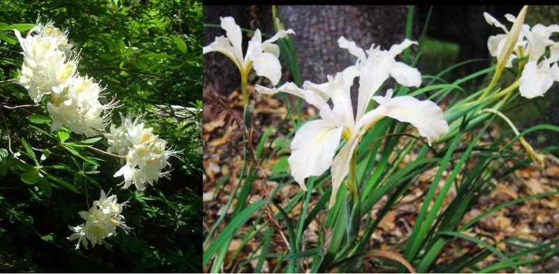 2 fleur