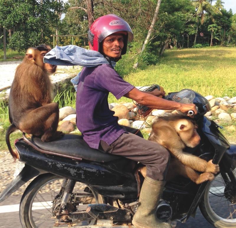 Monkey motor 1
